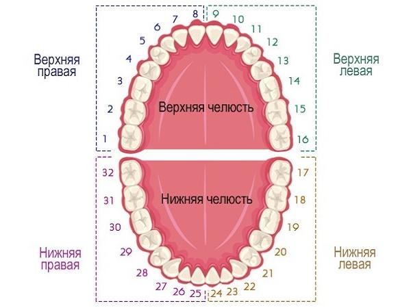рисунок универсальной системы нумерации зубов