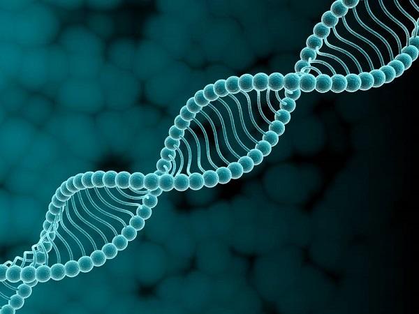какие гены отвечают за рост зубов