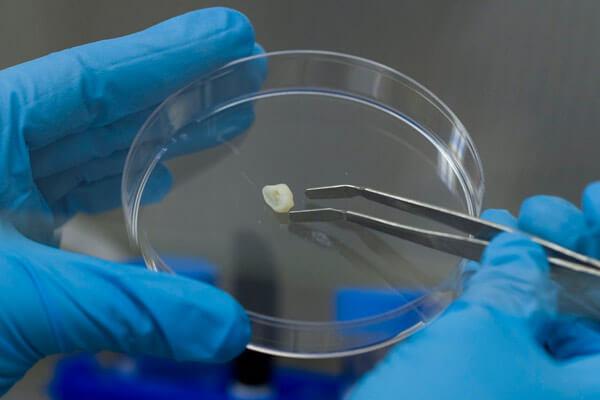 методики выращивания зубов у человека